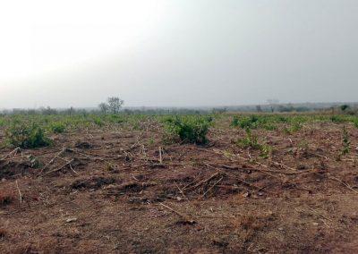 MALAWI DEVELOPMENT
