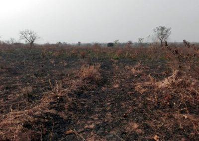 ZAMBIA DEVELOPMENT